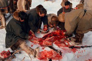 ネネツ族の食生活